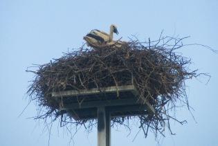 Dakovo Stork 1